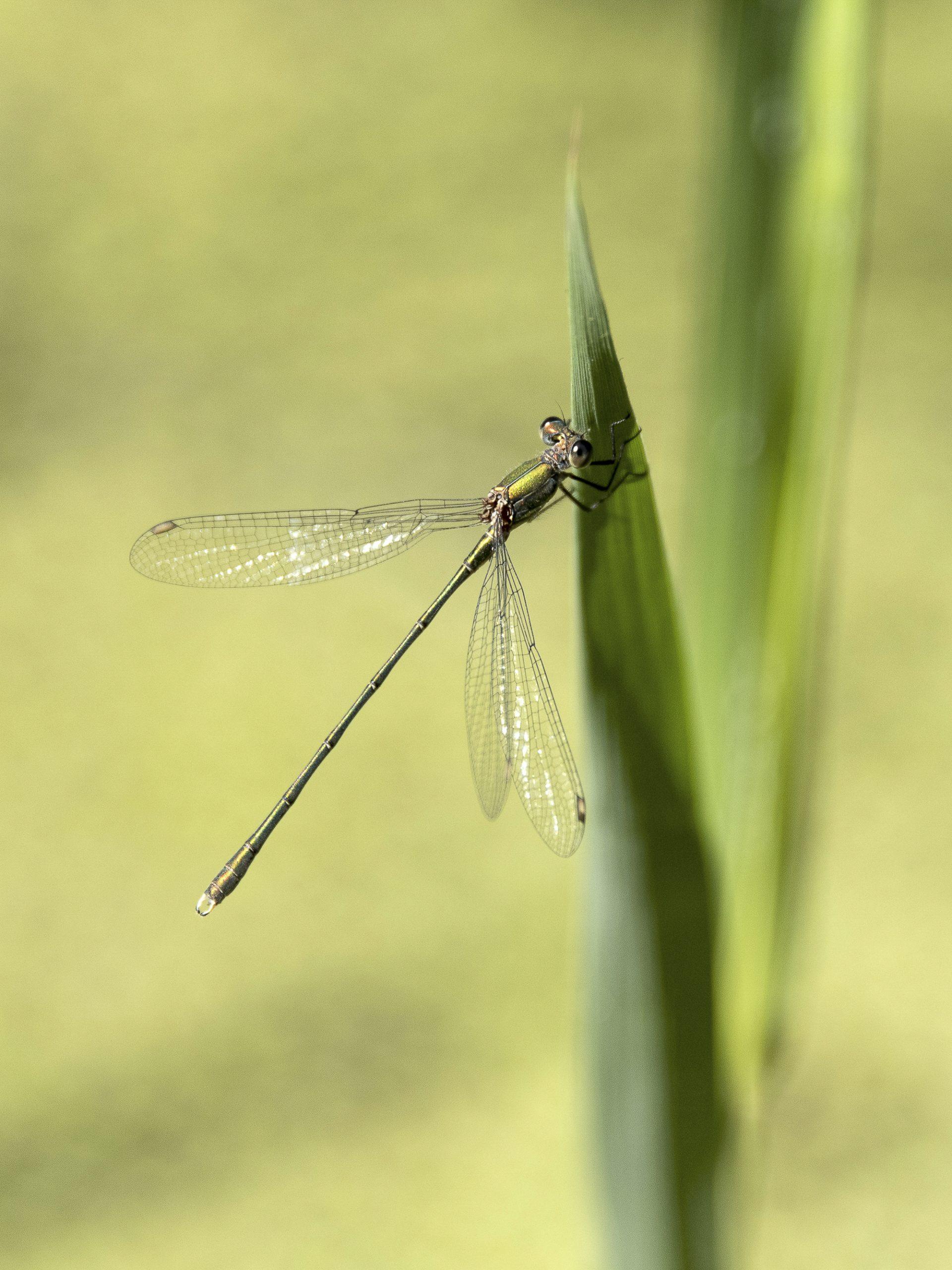 Jeanette-van-Starkenburg-Libelle-2